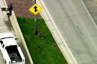 Cinci pui de rata le-au dat batai de cap soferilor pe o autostrada din SUA. Gestul facut de doi muncitori