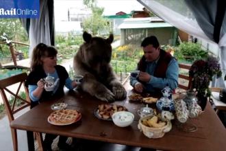 O familie locuieste impreuna cu un urs de 140 de kilograme. Animalul se uita la televizor si sta la masa cu stapanii lui