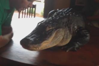 Un aligator a incantat invitatii la deschiderea unui restaurant din SUA. Ce s-a intamplat dupa ce imaginile au aparut online