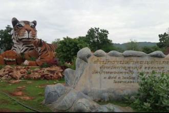 140 de tigri, evacuati dintr-un templu budist din Thailanda. Ce le-ar fi facut calugarii animalelor