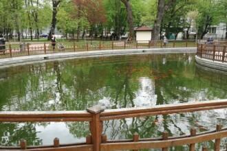 Primaria Bistrita angajeaza ingrijitor pentru singura veverita din parc si hranitor calificat de pesti. Ce salariu ofera