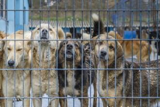 Politia Valcea face cercetari, dupa ce pe retelele de socializare au aparut imagini cu caini spanzurati langa o padure