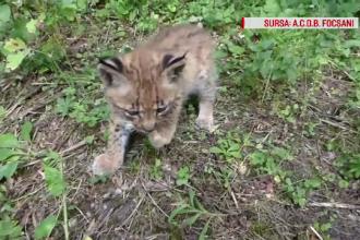Animalele salbatice din Romania au o sansa sa fie salvate. O asociatie a infiintat o linie gratuita, unde puteti cere ajutor