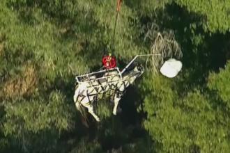 Un cal si stapanul lui, salvati cu elicopterul dupa ce au alunecat intr-un canion din California