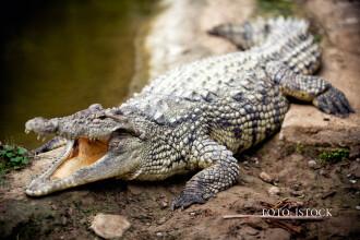 Un pastor din Zimbabwe a fost devorat de crocodili sub ochii credinciosilor. Ce miracol incerca sa faca