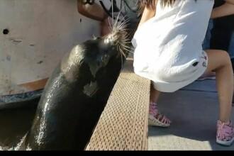 O fetita a fost trasa in apa de animalul pe care-l hranea. Cine a salvat-o pe tanara. VIDEO