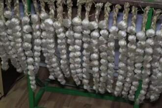Usturoiul de Copalau. Producatorii lupta pentru recunoasterea sa, in timp ce hipermarketurile sunt pline de usturoi din China