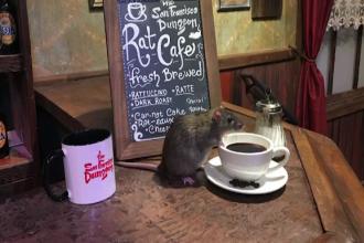 Un local le ofera clientilor un partener inedit de baut cafeaua. Este vorba despre animale rozatoare