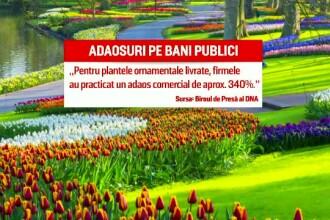 Ancheta spațiilor verzi din Capitală înflorește. Crizanteme cumpărate cu 310 lei firul