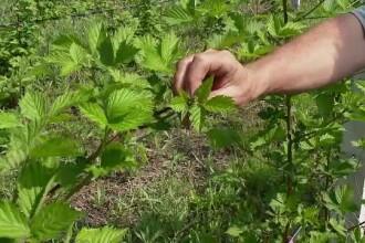 Plantele înmulțite în laborator, accesibile acum și în România