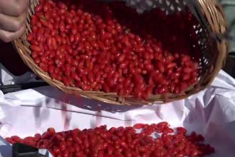 """Romanii care au dat lovitura dupa ce au cultivat """"fructul tineretii vesnice"""""""