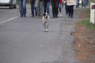 Povestea lui Chalo, câinele care a străbătut 200 de km alături de protestatarii din Armenia