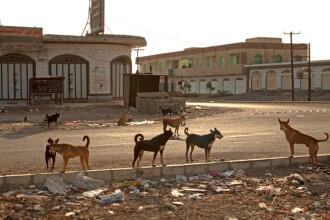 Șase copii din India, uciși de câinii sălbăticiți