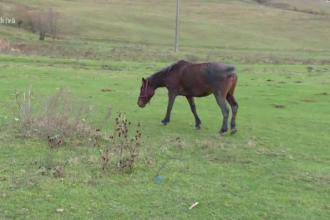Copil de 10 ani, în stare gravă la spital după ce a fost lovit în față de calul familiei