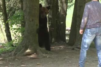 Un pui de urs a venit printre turişti, pe malul Lacului Sfânta Ana. Reacţia oamenilor