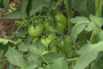 Metoda prin care agricultorii români și-au triplat producția în doi ani