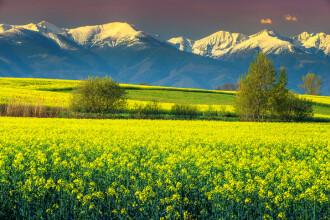 Prognoza până pe 18 martie. Cât de cald va fi și când vine primăvara