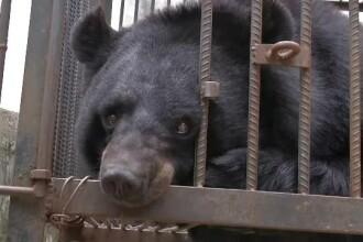 Au crezut că au adoptat un căţel, dar când a crescut și-au dat seama că este un urs