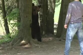 Ursul Șoni din Harghita a mușcat o turistă din Ungaria, care voia un selfie cu el