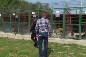 1.300 de lei/ lună pentru un câine adoptat la distanță, în Slatina. Cât costă, de fapt, hrana