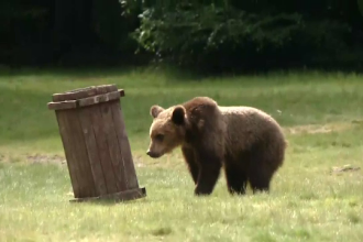 Ursul Șoni a fost eliberat în rezervația de la Zărnești