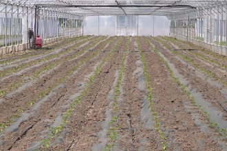 Reglementări stricte impuse de UE pentru produsele bio. Fermierii mici, avantajați