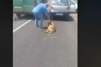 VIDEO. Un bărbat și-a legat câinele de mașină și l-a târât pe șosea. Animalul s-a rănit la picioare