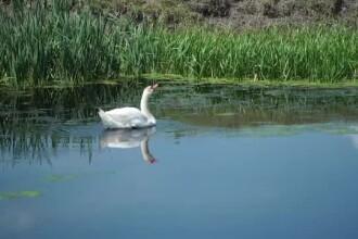 Delta Banatului, necunoscută de turişti şi abandonată de autorităţi. Zeci de specii rare trăiesc aici
