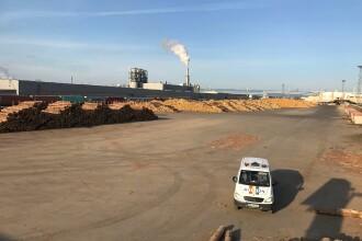 Percheziții DIICOT la cel mai mare exportator de lemn: Holzindustrie Schweighofer