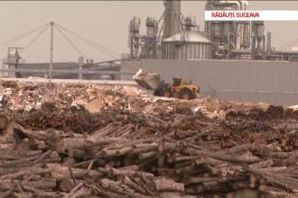 """Pădurile defrișate ale României. Holzindustrie se declară """"bucuroasă"""" de ancheta DIICOT"""