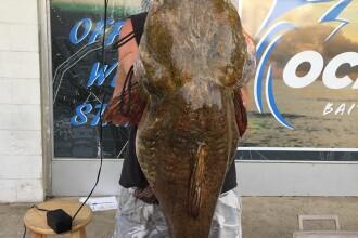 """Somn de 30 de kilograme. Un biolog a rămas cu gura căscată: """"Un adevărat monstru"""""""