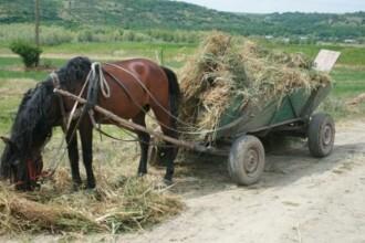 Descoperirea polițiștilor de frontieră într-o căruță încărcată cu iarbă. Ce se ascundea dedesubt