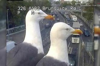 Ce au surprins camerele de supraveghere care monitorizează traficul din Londra