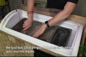 O firmă a produs îngheţată din viermi de muşte. Reacţia celor care o gustă
