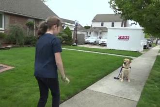 Câinele care ţine în viaţă o copilă grav bolnavă. A costat 15.000 de dolari