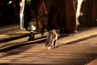 """O pisică a """"defilat"""" pe catwalk, la o prezentare Dior. Ce a făcut cu rochia unui model"""