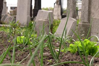 Cimitirul Evreiesc din Buzău, transformat în grădină. Oamenii au pus ceapă printre morminte