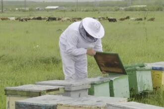 Apicultorii cer interzicerea substanțelor otrăvitoare pentru insecte. Cât de dăunătoare sunt