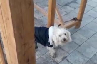 Ce a pățit un bucureștean care și-a părăsit câinele într-un parc din sectorul 2
