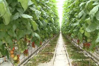 Fermele înființate cu bani europeni, șansa românilor de a face agricultură în țara lor