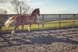 """Ce face o tânără din părul cailor. """"Mereu am fost interesată de artă"""". GALERIE FOTO"""