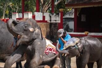 Ce a pățit un elefant forțat să danseze pentru amuzamentul turiștilor. GALERIE FOTO