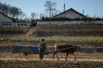 Nord-coreenii riscă să moară de foame anul acesta. Legătura cu lipsa foliei de polietilenă