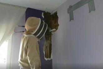 Ce se ascundea în peretele unui dormitor. Proprietarii au auzit zgomote în interior