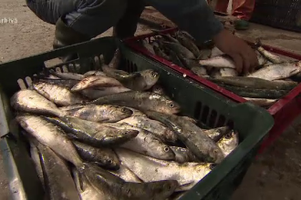Alerta peștelui stricat. Strategia prin care este scos la vânzare, deși este alterat