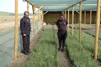 Un fermier din Brașov a obținut primul soi românesc de goji. Ce profit poate să aducă o cultură