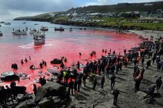Imagini sfâșietoare cu 23 de balene ucise. Reacţia oamenilor la vederea lor