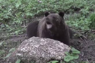 Clipe de groază pentru un cuplu de germani în Munții Făgăraș. S-a luptat cu un urs
