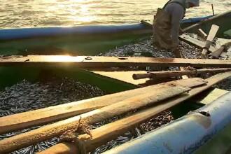 Deși localurile sunt închise, pescarii nu duc lipsă de comenzi. Vând peștele direct din barcă