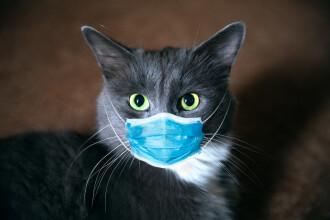 O pisică a fost testată pozitiv pentru noul coronavirus în Spania. Ce simptome avea